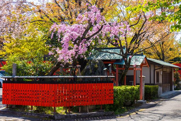 Photos: 2018 03 車折神社_051