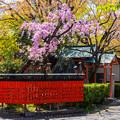 Photos: 2018 03 車折神社_052