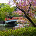 Photos: 2018 04 鶴岡八幡宮_125