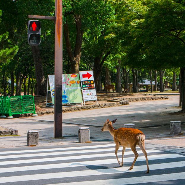 奈良公園_025