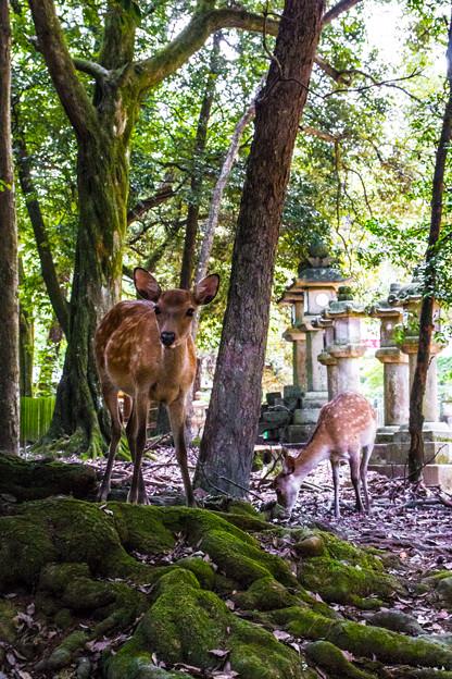 奈良公園_073