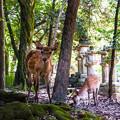 Photos: 奈良公園_073