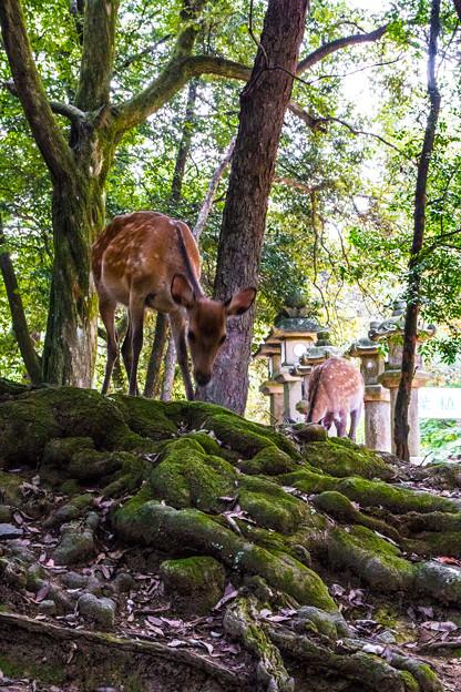奈良公園_074