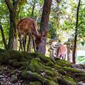 Photos: 奈良公園_074