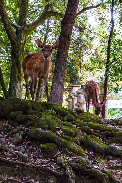 奈良公園_076