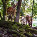 Photos: 奈良公園_076
