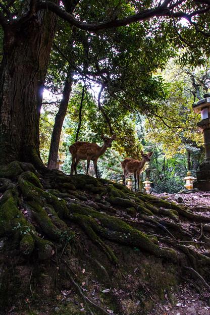 奈良公園_077