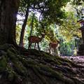 Photos: 奈良公園_077
