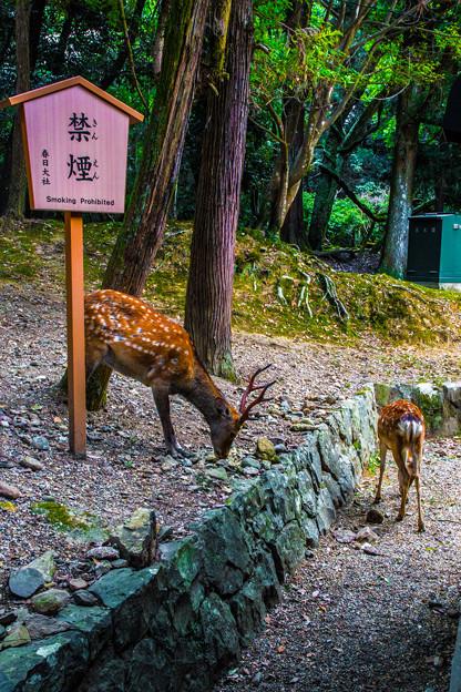 奈良公園_119