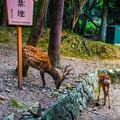Photos: 奈良公園_119
