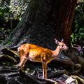 Photos: 奈良公園_125