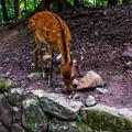Photos: 奈良公園_149