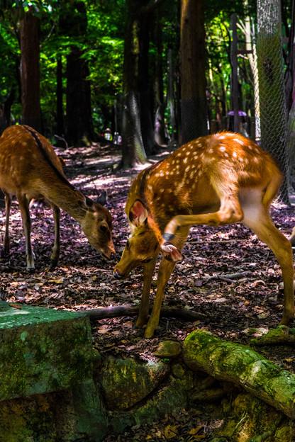 奈良公園_161