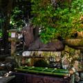 Photos: 奈良公園_108