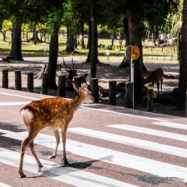 奈良公園_181