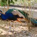 Photos: 多摩動物園227