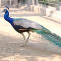 多摩動物園229