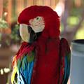 多摩動物園235