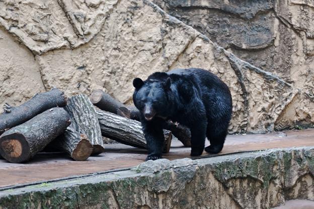 多摩動物園238