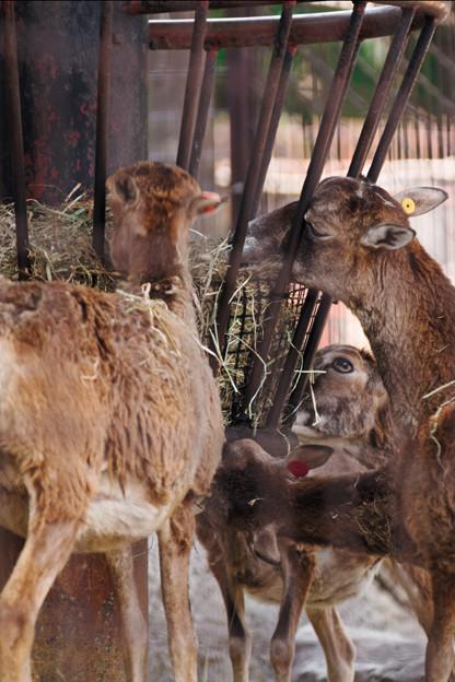 多摩動物園184