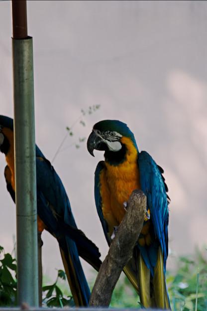 多摩動物園234