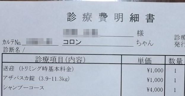 2019/01/16(水)・診療費明細書