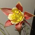 Photos: 2019/05/21(火)・2番目の大きなお花が咲いたよ(#^^#)