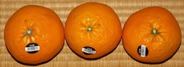 2020/04/17(金)・柑橘の物(ご近所様からの頂き物)