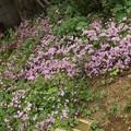 2020/05/26(火)・ピンクのお花がたっくさん咲いてるよ(#^^#)