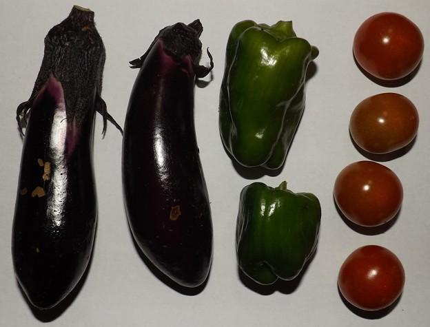 2020/06/22(月)・畑のナスとピーマンとミニトマト収穫