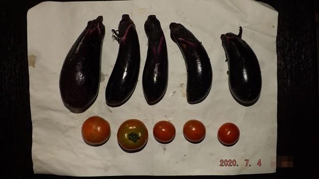 2020/07/04(土)・畑のナスとミニトマト収穫