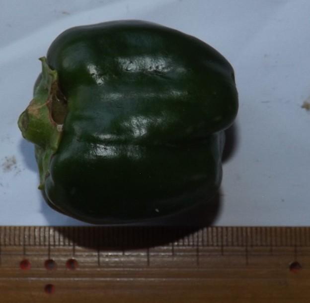 2020/08/04(火)・畑のピーマン・1個収穫