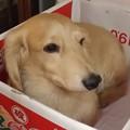 Photos: 2020/08/05(水)・箱入り息子は、何か考えている模様