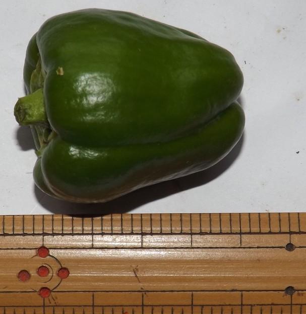 2020/08/09(日)・畑のピーマン・1個収穫