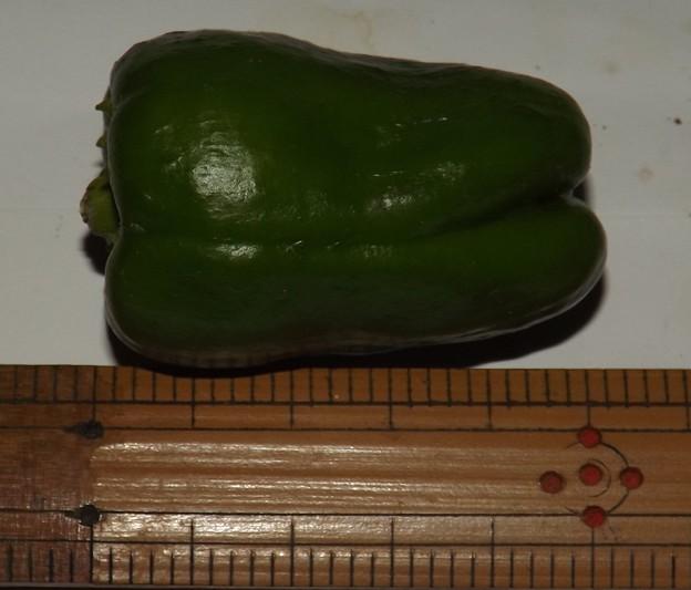 2020/10/05(月)・畑のピーマン・1個収穫