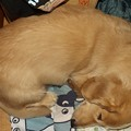 Photos: 2020/10/23(金)・ママのデスクの脇で眠ってた。カメラの音が気付かない位のZZZ