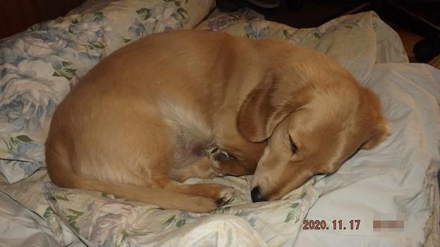 2020/11/17(火)・散歩の大事だが眠るのも大事ね。(#^^#)