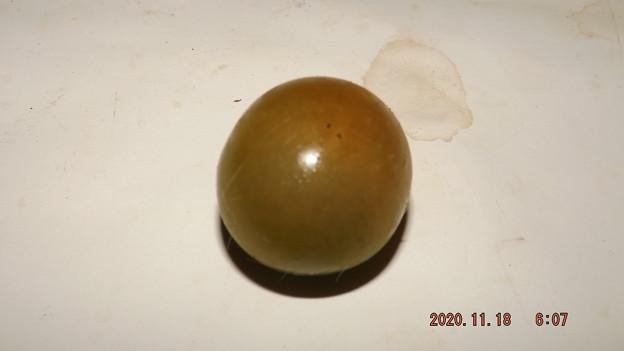 2020/11/18(水)・畑のミニトマト・1個収穫