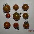 Photos: 2020/11/23(月・祝)・畑のミニトマト・9個収穫
