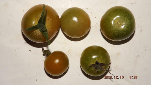 2020/12/10(木)・畑のミニトマト・5個収穫