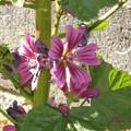 2021/01/01(金・祝)・ご近所散歩で見かけるお花