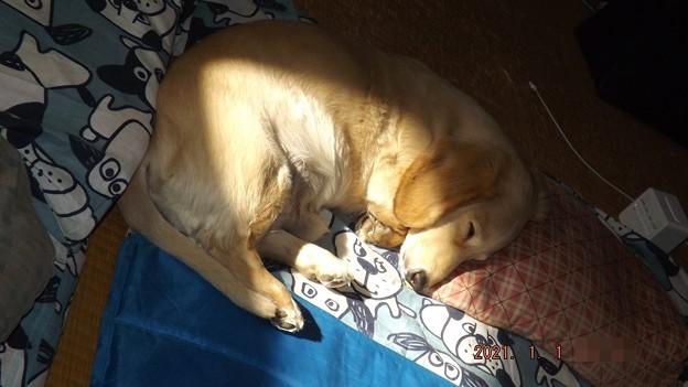 2021/01/01(金・祝)・ママの枕に頭を乗せながらひなたぼっこ