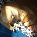 Photos: 2021/01/01(金・祝)・ママの枕に頭を乗せながらひなたぼっこ