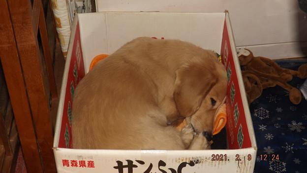 2021/02/09(火)・箱入り息子です_(_^_)_
