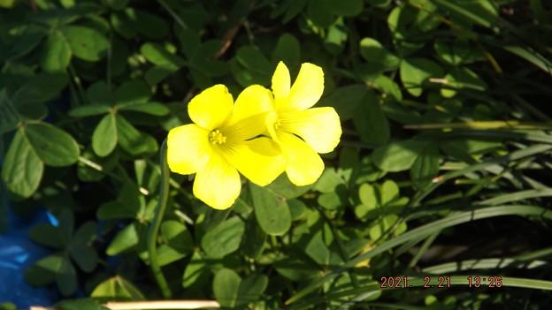 2021/02/21(日)・庭に咲いているお花・2