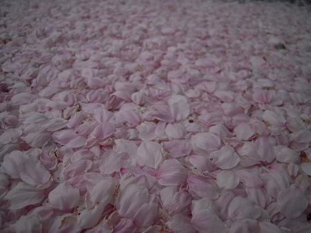 もも色絨毯