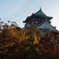 写真: 大阪城_秋