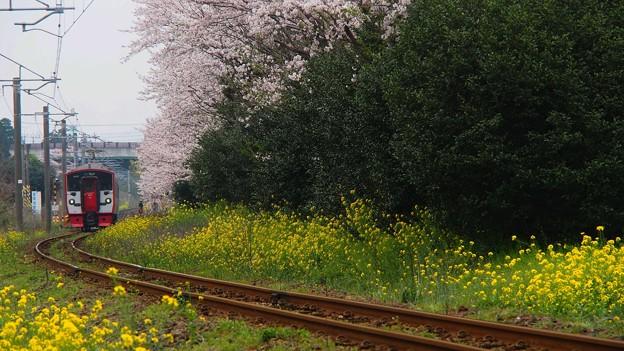春の真ん中を