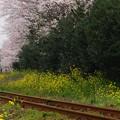 Photos: 春の真ん中を