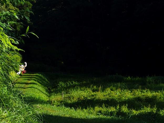 Photos: 夏へと続く道